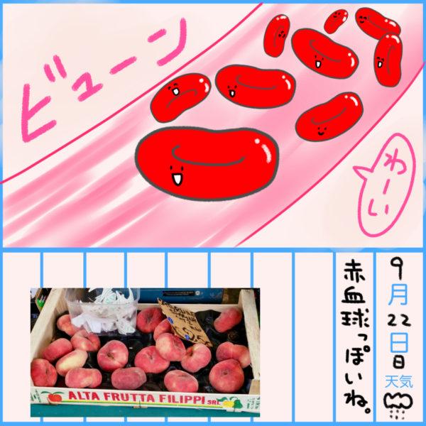 赤血球イラスト