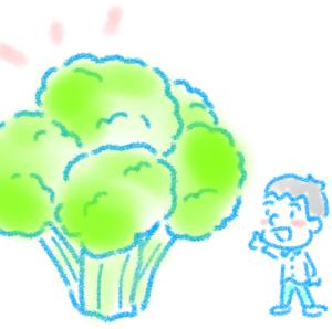【ブロッコリーの栄養!】髪型がブロッコリーだった思い出【お野菜コラム③】