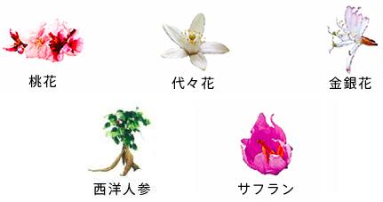 健康的な花つぼみの栄養