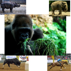 タンパク質なしでも草食動物は筋肉質でマッチョ!その理由とは!?