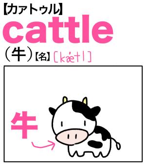 cattle(牛) 英単語のゴロ合わせ4コマ漫画 Lesson.269