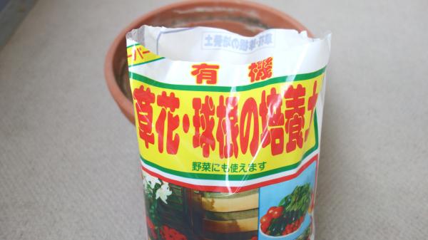 有機バジルの家庭菜園