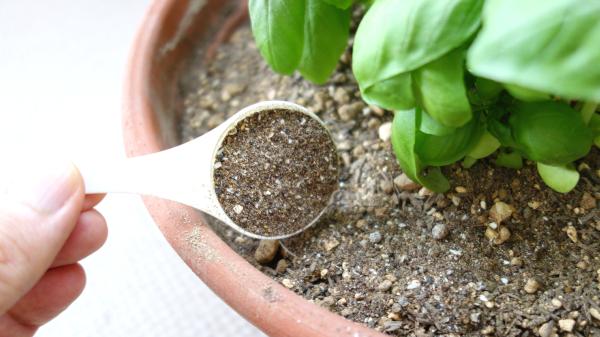 カニの肥料でハーブ栽培