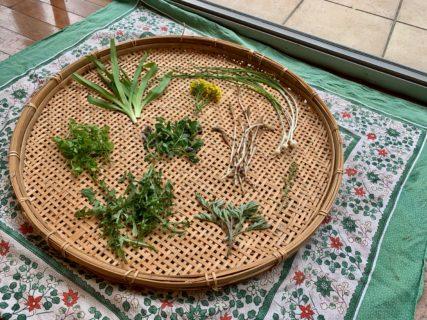 野草を食べたり(前編)【普通の日記】