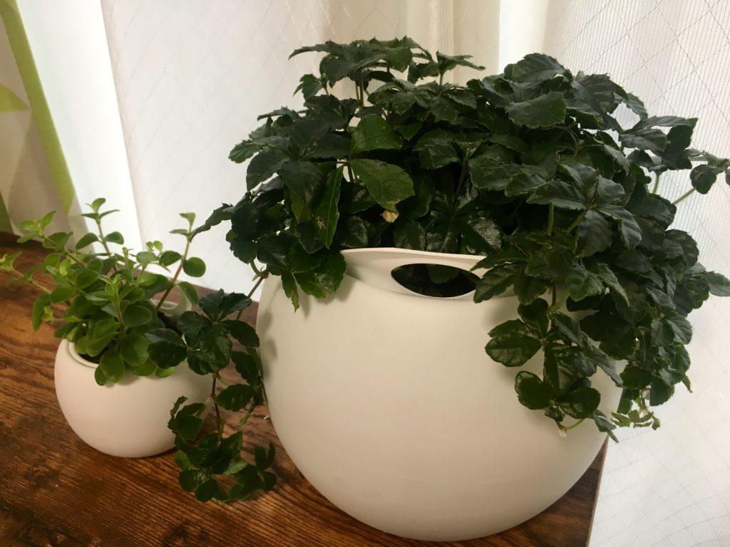 部屋に植物が増えてきたり【つれづれ日記】