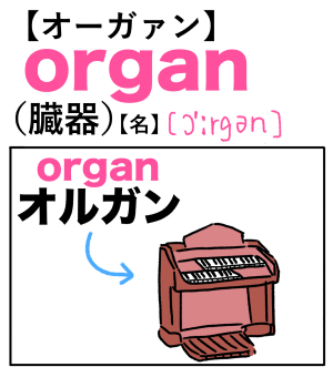 organ(臓器) 英単語のゴロ合わせ4コマ漫画 Lesson.259